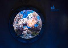 Bitte nicht klopfen (hakkehorn) Tags: fish water aquarium tank biosphere clownfish potsdam clownfisch tropenwelt