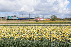 NMBS 2835 at Noordwijkerhout, April 17, 2016 (cklx) Tags: holland spring daffodils narcissen 2016 bollenstreek beneluxtrein beneluxtrain