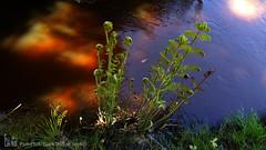 20160419_122141 (C&C52) Tags: landscape eau paysage extrieur plantes phoneshot fougres ruisseau