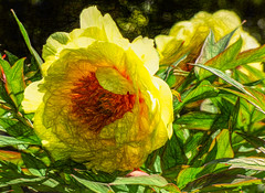 Sketchy Flowers (Steve Taylor (Photography)) Tags: uk greatbritain england orange flower green london art texture leaves sunshine yellow digital sketch spring glow unitedkingdom sunny palace foliage gb eltham