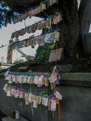 If Wishes Were Horses... (prima seadiva) Tags: tree peace wishes capitolhill wishing altruistic westernprayerflags