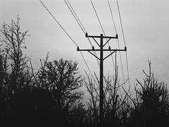 film. (eunoia ecoas) Tags: autumn trees sky black beautiful beauty dark landscape soft solitude power darkness minolta artistic gothic goth poetic pole odd ethereal ambient nostalgic expired autumnal atmospheric melancholic eunoia ecoas