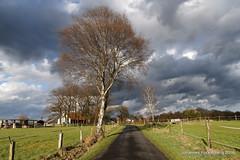 Farbenspiel (grafenhans) Tags: strasse sony feld himmel wolken alpha 700 tamron baum farben frhling birke a700 alpha700 grafenwald 281750