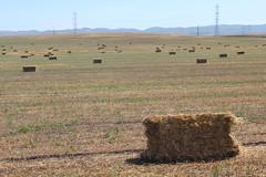 IMG_0611 (mudsharkalex) Tags: california hay bales bale haybale haybales mountainhouse mountainhouseca