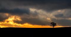 one more kiss (keith midson) Tags: sunset sky cloud tree clouds rural haze smoke horizon tasmania oatlands
