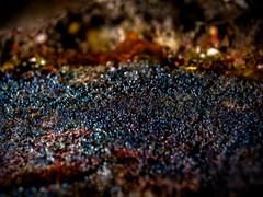 P3276105 (Jeannot Kuenzel) Tags: leica blue sea macro water port photography islands la mediterranean underwater alien under deep scuba diving canarias olympus malta el zen canary supermacro moods asph islas f28 45mm underwaterworld s2000 dg gomera 240z hierro underwaterphotography extrememacro ois jeannot inon macroelmarit underwatercreature kuenzel z240 maltaunderwater underwatermacro underwateralien supermacrophotography ucl165 wwwjk4unet jk4u epl5 maltaunderwatermacro maltaunderwaterphotography bestmaltaunderwaterpictures maltamacro maltascubadiving underwatersupermacro jeannotkuenzel aliensofthedeepblue superextrememacro aliensofthesea