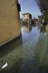 scorcio con papera (luca.nassini) Tags: trip primavera river duck spring italia fiume mantova gita belli lombardia sul piu papera borghetto anatra mincio borghi borgho