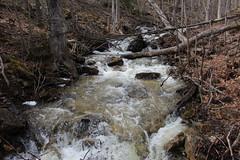 IMG_0309 ( Szczep Wodny Batyk ) Tags: zima wiosna brucetrail snieg wedrowka szczepwodnybaltyk szczepbaltyk silvercreekconservationarea wedrownicy druzyna16ta starsiharcerze