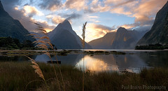 Milford Sound Grassy Sunset (Panorama Paul) Tags: sunset newzealand milfordsound nikkorlenses nikfilters nikond800 wwwpaulbruinscoza paulbruinsphotography croporama