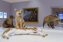 Der Wolf @ Jagdmuseum Schloss Stainz