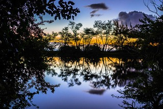 Dusky reflection