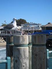 Redondo Pier, Los Angeles (Perkules) Tags: losangeles bikepaths redondopier marvinbraudebiketrail