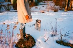 (budd) Tags: sunset dog snow film analog 35mm buddy