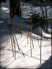 20160326-141 (sulamith.sallmann) Tags: schnee winter plants snow nature weather ast natur pflanzen tschechien czechrepublic ste wetter sonnenlicht esko esk sulamithsallmann