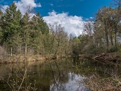 Eisvogel Revier (AchimOWL) Tags: nature lumix see outdoor natur himmel wolken panasonic owl landschaft wald hdr gx8 eisvogel
