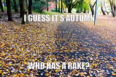 Autumn leaves (garydlum) Tags: autumn leaves au australia canberra belconnen australiancapitalterritory lakeginninderra