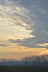 Evening Tree (- Laura Nicole -) Tags: trees sunset sky nature clouds outdoors spring horizon country fields treeline