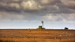 Windmill with sheep (RWYoung Images) Tags: windmill field rural canon landscape sheep farm country australia victoria watertank paddock mortlake quantumentanglement rwyoung 5d3 abctvweather