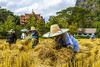 ChiangRai_2201 (JCS75) Tags: canon thailand photography countryside asia worker farmer ricefields peasant chiangrai colorimage