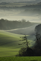 Spring Portrait (Richard Paterson) Tags: park trees mist west green downs sussex bury south national valley fields sprint rolling