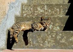 Micio (anto_gal) Tags: cat toscana gatto grosseto animali micio argentario 2016 portoercole