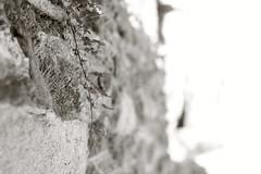birkaç küçük kalp.. (photographerofearth) Tags: white monochrome canon hearth kalp backround yonca alfaalfa neşvünema