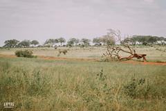 _N6A2036 (Kappas valokuvaamo) Tags: africa park trees wild game nature animal animals landscape drive kenya wildlife east safari national kenia tsavo afrikka