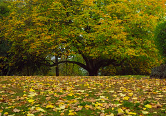 trees and leaves (Gavin.Haberfield) Tags: autumn leaf screen serene saver dayelsford