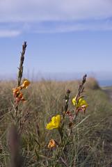 summer breeze (wirsindfrei) Tags: newzealand nature landscape nikon outdoor canterbury bankspeninsula neuseeland akaroa nikond60 okainsbay