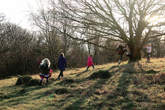 to the climbing tree! (Sam Turner) Tags: uk tree ada cumbria elodie manon freya vinnie arnside 2015 eos7d heathwaite