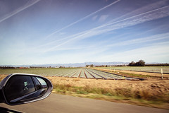 (peaflockster) Tags: california roadtrip pch crops agriculture converginglines