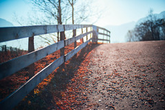 It's a total fall (w a n d e r e r ▲) Tags: winter red sunlight leaves dof journey trento d610 50f14
