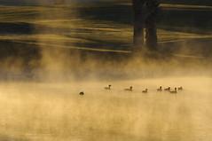 It's getting cold (fenicephoto) Tags: arizona lake fog nebel brume