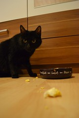 Samanta - 10.01.2015 (GoldstadtTV) Tags: pet black cat katze schwarz samanta кошка schwarze черная