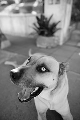 _MG_1472 (seandavidreed2016) Tags: blackandwhite dog cat