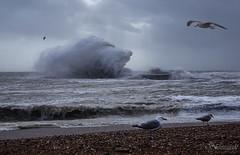 Whoosh! (Shastajak) Tags: seagulls beach waves spray imogen herringgulls roughseas stormimogen