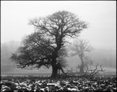 Old Oak (Lars_Holte) Tags: pentax67ii smctakumar6x7 75mm f45 67 6x7 mediumformat blackandwhite monochrome bw film analog analogue rollei rolleirpx rolleirpx400 400iso d76 classicblackwhite filmforever filmphotography larsholte homeprocessing jobo autolab atl1500 landscape winter snow tree jægersborgdyrehave dyrehaven danmark denmark solitarytree oak idealformat 120 ishootfilm pentax 120film