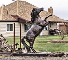 Bronze Horse (Eyellgeteven) Tags: sculpture horse animal animals statue metal bronze dark big farm critter tail country farming farmland hoof farmanimal equine mane hooves rearingup equusferuscaballus eyellgeteven