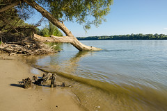 Riverside (Gyula Toth) Tags: river hungary riverside duna danube fa víz debrina