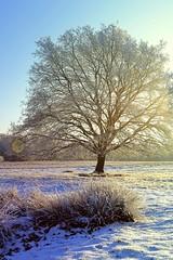 Winter (DanielHiller) Tags: schnee winter sky snow tree sunshine germany landscape deutschland nikon heaven gimp himmel baum sonnenschein winterlandschaft niedersachsen lowersaxony schneverdingen