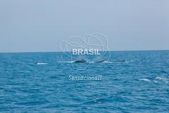 NE_Abrolhos0070 (Visit Brasil) Tags: horizontal brasil fauna natureza bahia nordeste externa abrolhos semgente diurna
