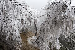 _MG_1051 (schamrock77) Tags: winter italy mountain ice freezing natura inverno montagna friuli ghiaccio galaverna canon6d 35f2is