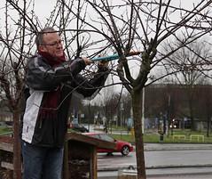 Lente maken in de Singelpark Kweektuin (Vrienden van het Singelpark) Tags: storm fruit leiden bomen wind lente planten regen bloemen kou vriend fietsenrek snoeien tuinieren kwekerij bloeien singelpark schoffelen vrijwilliger