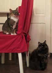 Prague (47) (Silvia Inacio) Tags: stella cats prague tabby praha praga gatos calico gata czechrepublic repblicacheca catscafe terynka kokaffreya