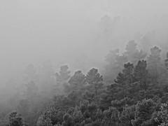 Foggy morning in Provence (Hlne_D) Tags: blackandwhite bw cloud france tree fog forest noiretblanc hike nb paca provence nuage arbre brouillard hdr ballade fort alpesdehauteprovence ahp provencealpesctedazur hdrpicture pierrevert photohdr hlned