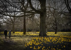 yellow (docdave71) Tags: house black yellow garden landscape withe chestnuts oaks cedars ascott tranquillity