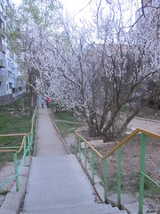 IMG_4070 (Souls_Eater) Tags: trees windows sky building speed cherry evening spring walk ukraine wires apricot everydaylife donetsk