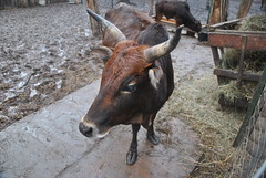 DSC_0031 (Rinswid) Tags: park nature animal spring kharkov feldman ecopark