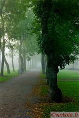 vintola photography (vintola) Tags: park leica autumn tree fall fog finland alley finnland nebel outdoor herbst baum hst trd syksy naantali gasse dimma sumu ndendal puistotie vintola