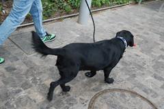 Walkies (Bob Hetherington) Tags: street espaa dog walking spain outdoor candid perro micro andalusia mlaga 43 walkby paseoparque